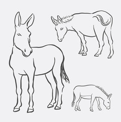 Donkey pet mammal animal drawing. Good use for symbol, logo, web icon, mascot, decorative element, object, sign or any design you want.