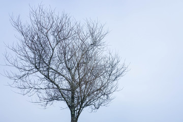 Leafless tree in the winter