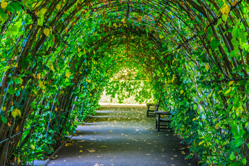 Walkway covered by green leaves in Hyde Park Wall mural