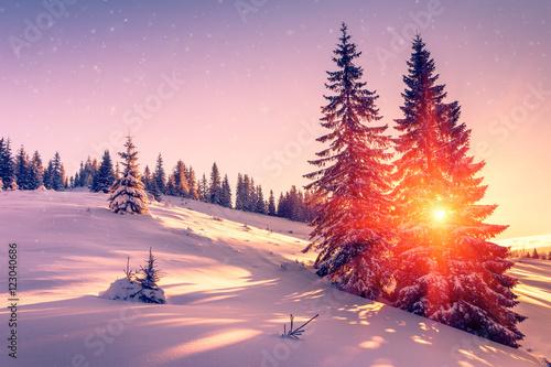 Mountain forest tree christmas tree sun morning sunrise hd wallpaper