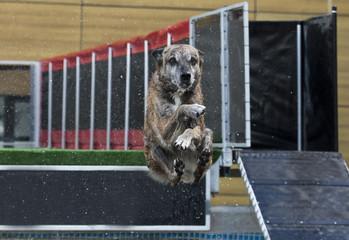 Wall Murals Dog Hond maakt een bommetje
