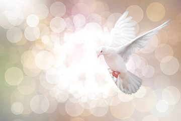 White Dove on vintage Bokeh