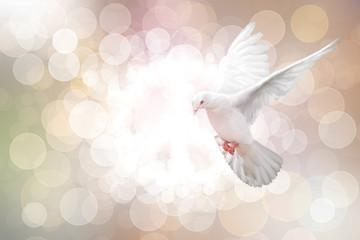 Fototapete - White Dove on vintage Bokeh