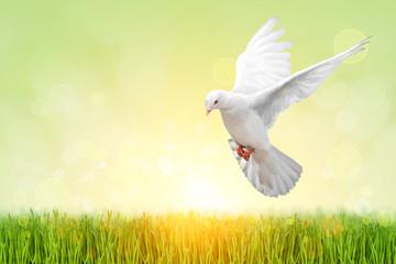 Fototapete - White Dove on green Bokeh