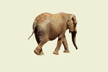Elephant said goodbye and left.