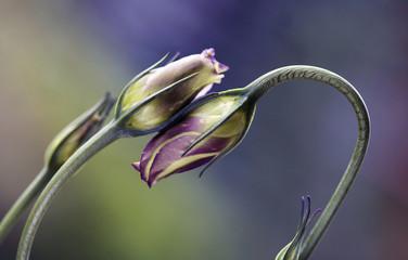 Obraz Kwiaty w pąkach - fototapety do salonu