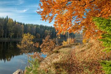Herbstfärbung am Frankenteich im Südharz