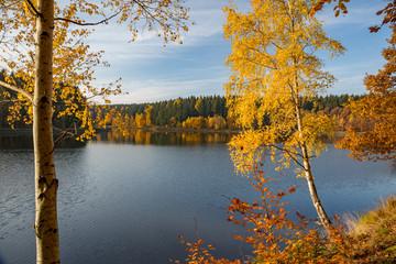Goldgelbe Herbstfärbung am Frankenteich im Südharz