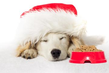 Christmas labrador puppy sleeping