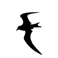 Bird seagull flying vector illustration  silhouette black