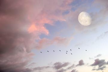 Birds Flying Moon