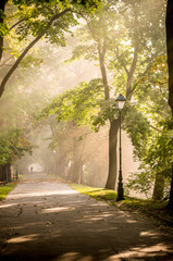 Foto auf Leinwand Golf Park alley in the fog illuminated by the sun, with light beams visible