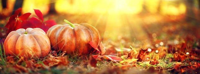 Autumn Halloween pumpkins. Orange pumpkins over bright autumnal nature background Fotoväggar