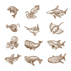 Set of aquatic Animals, Hand drawing vector illustration.