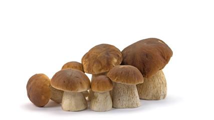 Steinpilze, Boletus edulis, Mushrooms
