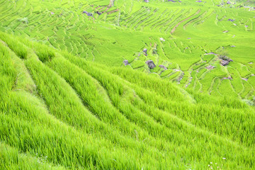 rice terrace from top of the hill, China
