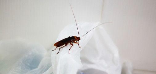 A cockroach on plastic in toilet