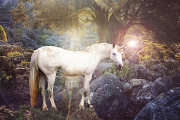 Unicorn realistic photography.
