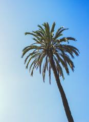 Palm Tree Tropical Vintage Sky Summer Photo Stock
