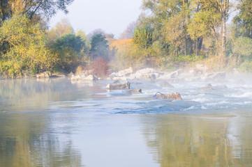 Garden Poster Small river in the autumn season