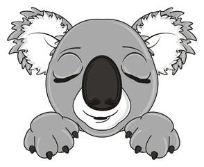 sleep, dream, close eyes, cartoon, gray, animal, bear, koala, australia, zoo, nature, wild, marsupial, toy, face, muzzle