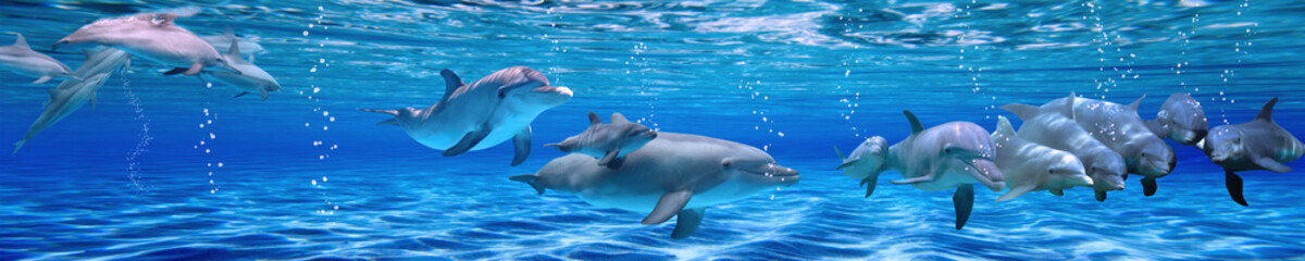 Photo sur Plexiglas Dauphin Panorama of Underwater life. Dolphins