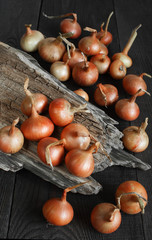 Fresh onions on the dark wooden table