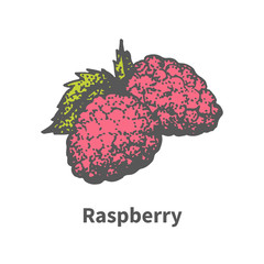 Vector hand-drawn ripe juicy red raspberry
