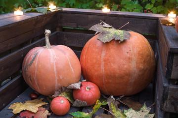 Halloween pumpkin in autumn forest