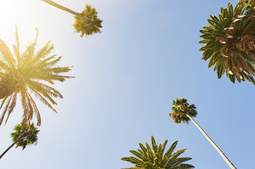 Palm Trees looking up to the sky