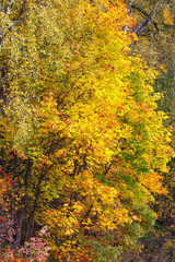 Autumn forest foliage bright colorful background