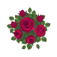 red roses on white background. roses card
