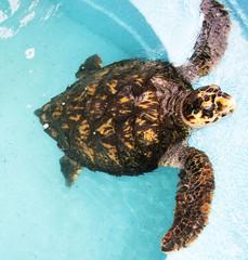 tartaruga em extinção
