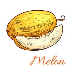 Melon vector color sketch icon