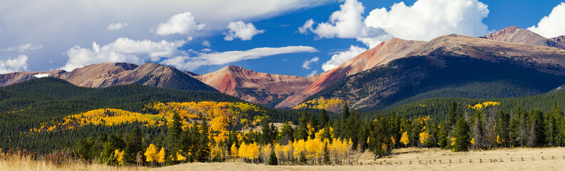 Poster Mountains Panoramic Fall Forest of Aspen Trees Landscape in the Colorado Rocky Mountains