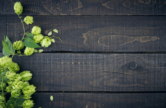 Border from green hop branches on dark rustic wooden background.