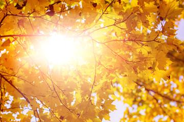 leaves of autumn trees