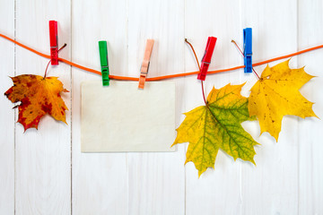 Autumn maple leaves and blank card.