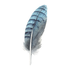 Watercolor bird feather from wing isolated. Aquarelle wild flower could be used for background, texture, wrapper pattern, frame or border.