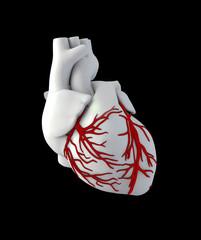 Illustraton Anatomy of Human Heart - Isolated on black