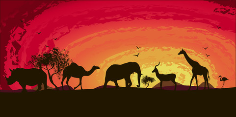 sunset in africa , rhinoceros , camels , flamingos , goat, elephant, camel, vector
