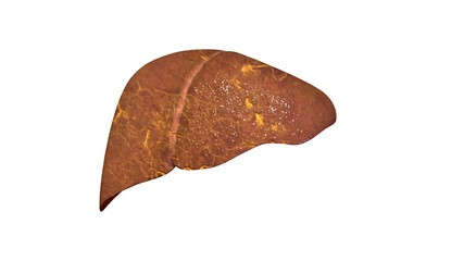 3d illustration human body organs