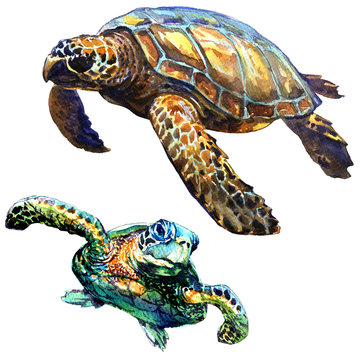 Sea green turtle isolated, set, watercolor illustration on white