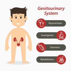 Genitourinary system and medical line icon ( flat design )