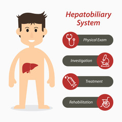 Hepatobiliary system and medical line icon