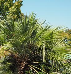 Aluminium Prints Palm tree Palm tree leaves