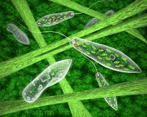 The simplest ciliates and euglena in their natural habitat. 3d image