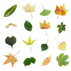 composition de feuilles d'arbres sur fond blanc