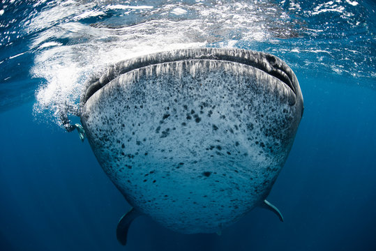 Underwater view of whale