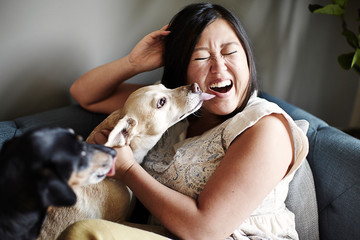 Mid adult woman pulling a face whilst being licked by dogs on sofa